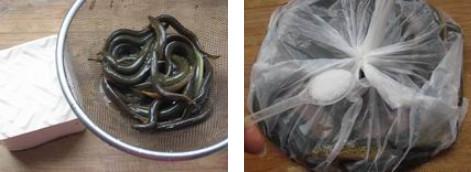 泥鳅怎么杀-图解小泥鳅最简单的宰杀方法1