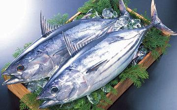柴鱼是什么鱼2