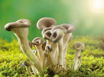 蘑菇(鲜蘑)的热量-蘑菇营养素含量(每100克)1