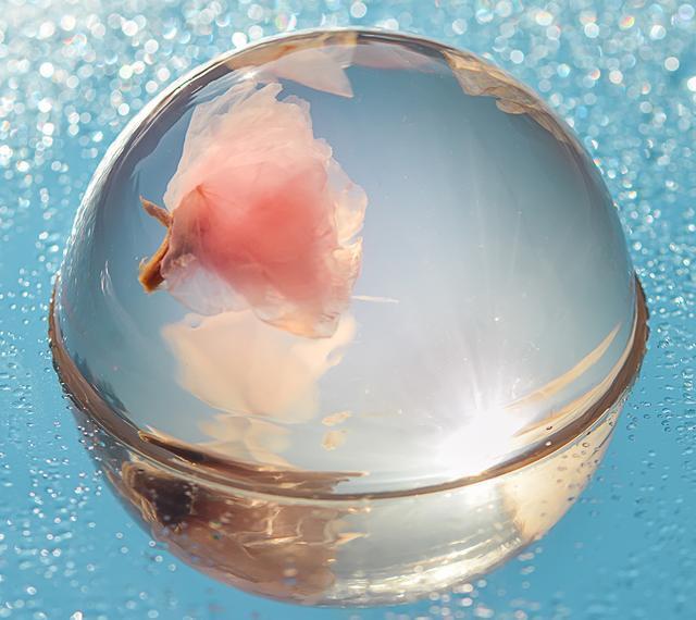 三月赏樱花,盘点樱花零食饮品,颜值高到出类拔萃2