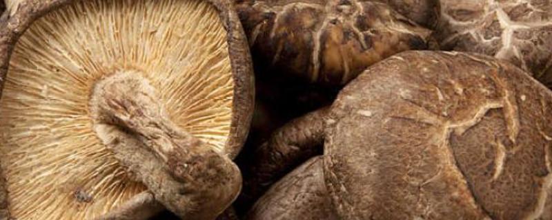 菌菇种类有哪些?1